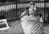 Coney Island NY Amusement Park movie download 34